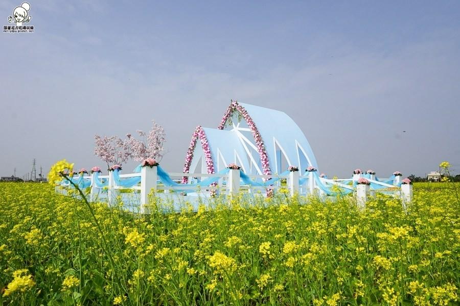 油菜花田中間的教堂超美!在台灣唷