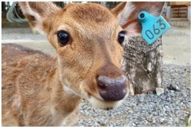 到屏東「鹿」境隨俗 來場超萌的可愛接觸
